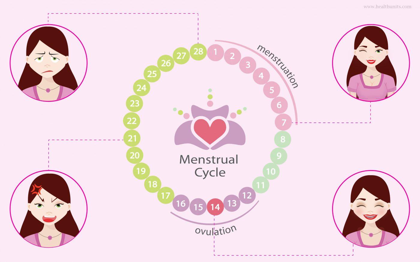 Female Hormones Cover
