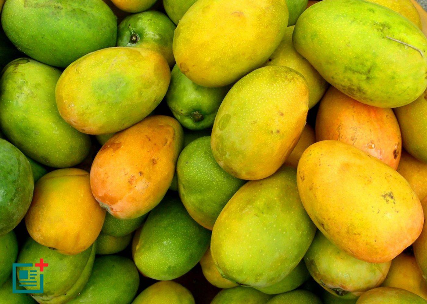 mangifera-indica